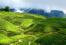 Kerala Tour / Find the perfect holiday destinations in Kerala and enjoy some relaxing time off from your daily routine, Tour Packages in Kerala, Family Holiday Packages seasonzindia.