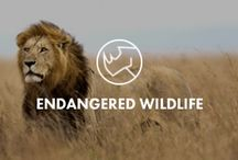"""ENDANGERED WILDLIFE / Visit and learn about wildlife that is considered """"threatened"""" or higher by the International Union for Conservation of Nature. Focus on wildlife conservation."""