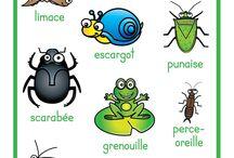 thème - insecte