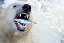 Animais Selvagens / Ciência    Tecnologia    Meio Ambiente