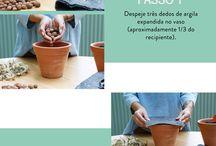 • J a r d i n a g e m / Cactos, Suculentas , Flores