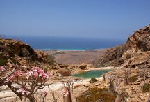 Travel to Socotra / Create with us your unforgettable travel holiday! http://www.socotra-international.ru/en/home.html