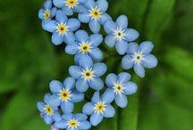 AZZURRO ~~~BLUE