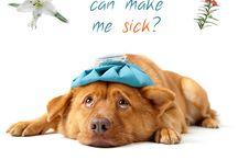 Pet Care Tips
