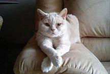 Cat love / by Denise Stephens