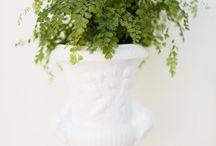 Indoor Potplants