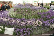 Places To Buy Plants! / Lots of suggestions of great places to buy plants, seeds, bulbs and anything related to gardening!  Here you'll find details of specialist plant fairs, plant sales, reputable growers of quality bulbs, gardens shows and events and much more!