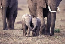 Elephants...its a thing with me :)