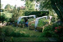 Mijn tuin / gardening