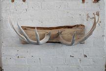 antlers / by teresa taylor