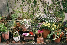 POTTED  PLANTS (SMALL)