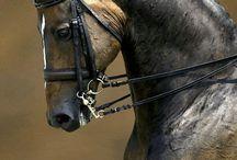 konie :3 ^-^