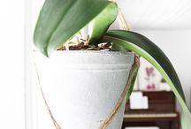viherkasvit  / vinkkejä kasvatukseen ja sisustukseen