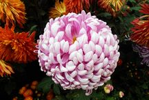 Flowers in the season