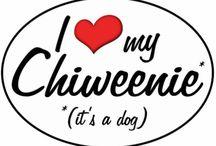 Chico my Chiweenie / by Jessica Kendrick