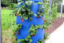 Comment fabriquer une tour a fraisiers / La culture dans une « tour » à fraisiers permet de concilier ces impératifs : besoin de place, ici verticale, support de culture enrichi en humus, facilité de récolte, avec un minimum de place. (Balcon, terrasse, cour, toit, petit jardin en ville) Cette tour a fraisier peut servir également pour les herbes et plantes aromatiques,  toutes sortes de plantes de fleurs décoratives,..., pour pas cher.