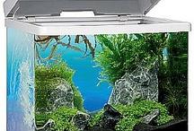 Aquarium Shop / online aquarium store...great styles, amazing prices!