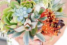 Flowers  / by Sue Kittle