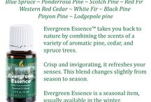 Young Living Evergreen Essential Oils