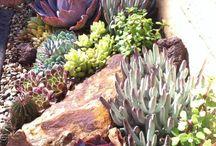 garden- succulents