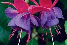 Flowers / by Melissa Bradley