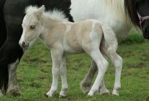 żrebaki-foals
