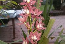 Orchideen und Blumen