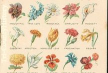 The language of flowers / by Amara Villasenor
