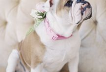 Pets Wedding Ideas