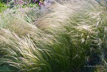 Garden - Növénykéink :)