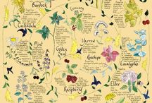 All Things Herbalism / by Jennifer L.S. Weber {All Things Jennifer}