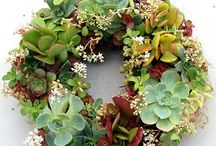 plants/flowers / by Kimberly Alberda Kimbell