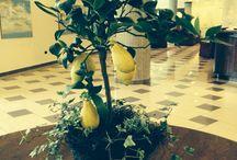 Lemon Orange / Limoni Arance Mandarini Bergamotti Cedri della costiera