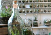 Terrariums / by At Mrs B's Place