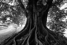 Trees / by Kimberly Sabatini