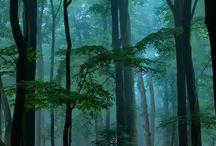 Ağaçlar-Manzaralar