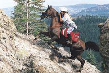 Arabian Horses / Anything Arabian