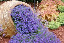 Κηπος .Βεραντα  .Λουλουδια.