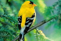For The Love Of Birds / by Denise Glenn
