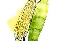 Illusztrációk - Zöldség-gyümölcs