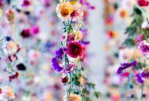 Dekoracje, rośliny