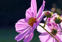 1000+ ideas about flower photography