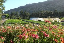 Tulbagh Nursery