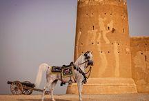 JENNIFER OGDEN / Arabian horses photographer