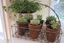 Plant ideas