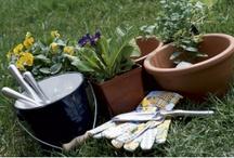 Gardening / by Kimberly Horne Kanalas