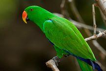 Birds in store & info