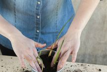 homesteading + homegrown