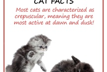 Pet Tips & Facts of the Day! / Here at Aureles, not only do we pride ourselves on providing essential & unique pet products, but also sharing some amazing & useful tips & facts when it comes to caring for our furry friends. Enjoy!  Visit www.aureles.com