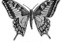 Vintage Butterfli.....